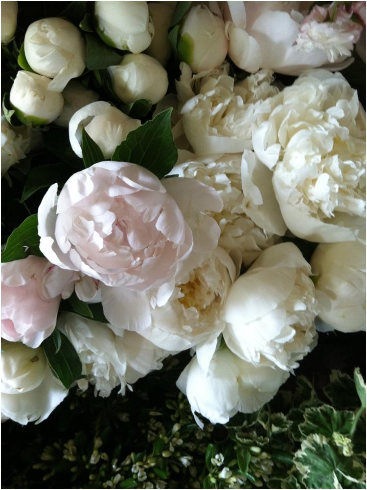 flowerwilddunhamrd_0408
